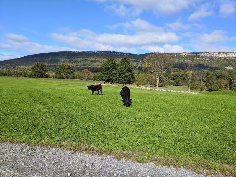 Kiernan Farm
