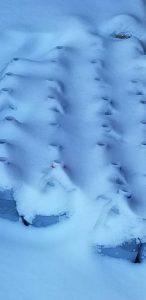 jugs in snow_Nancy Rider Riley